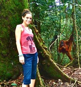 Orangutan on Sumatra