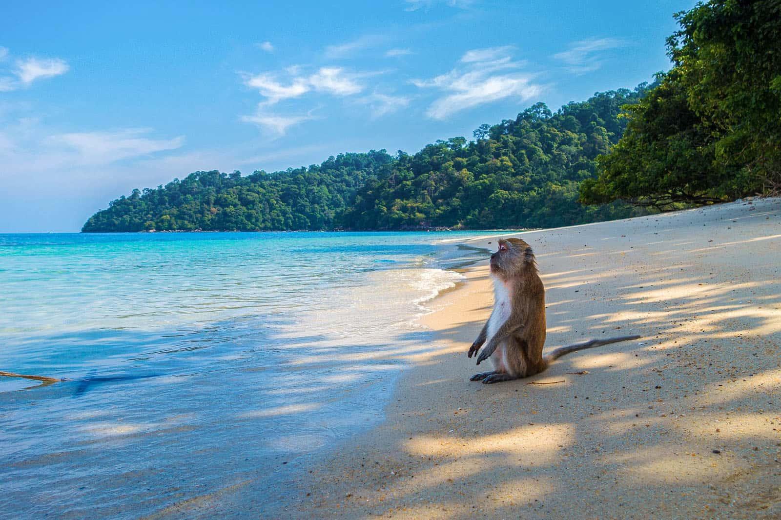 Monkey on a beach