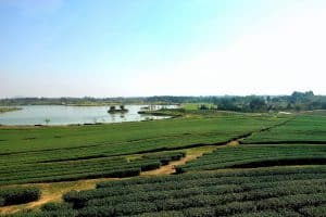 Singha Park is one of the major things to do in chiang rai