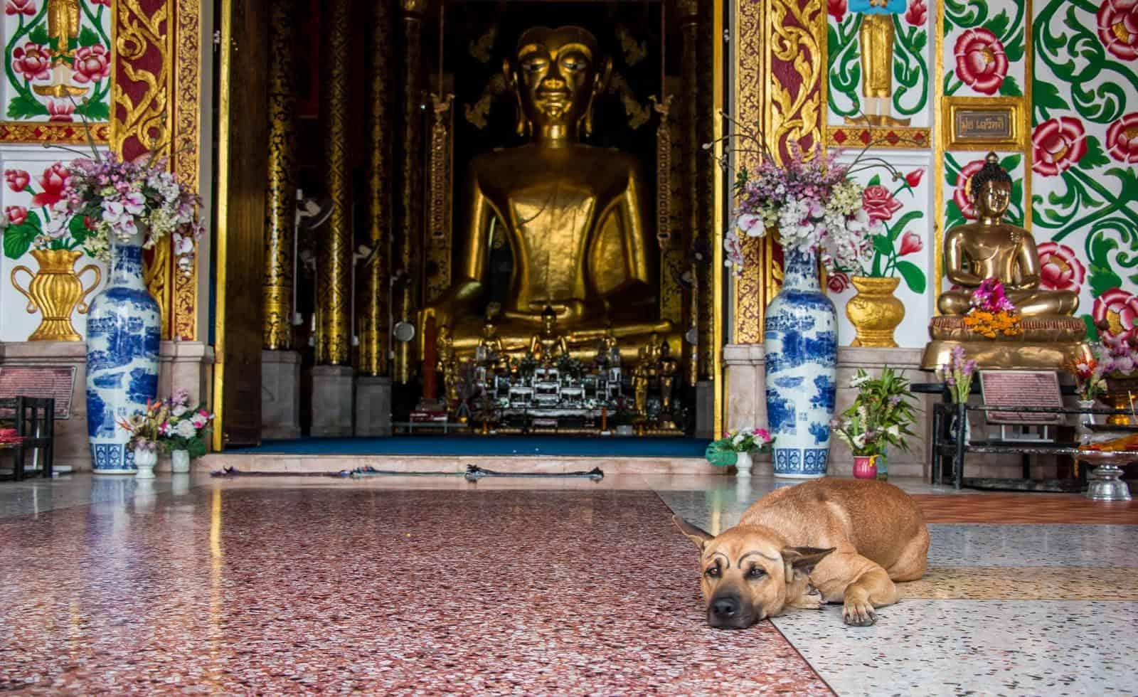 Chiang Rai Itinerary: 10 Things To Do In Chiang Rai That You Can't Miss