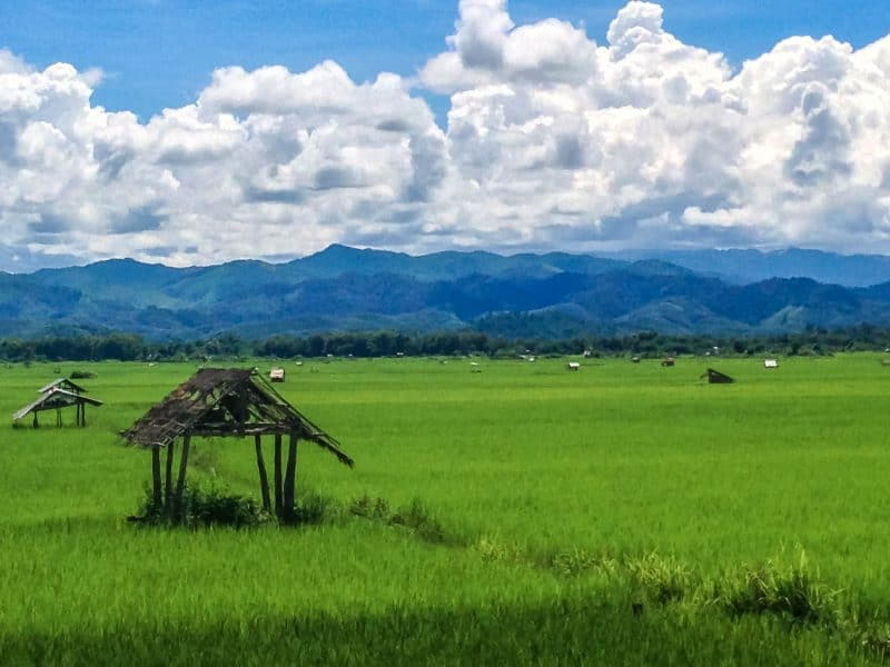 The sea of rice makes for the perfect stop on your Luang Namtha itinerary
