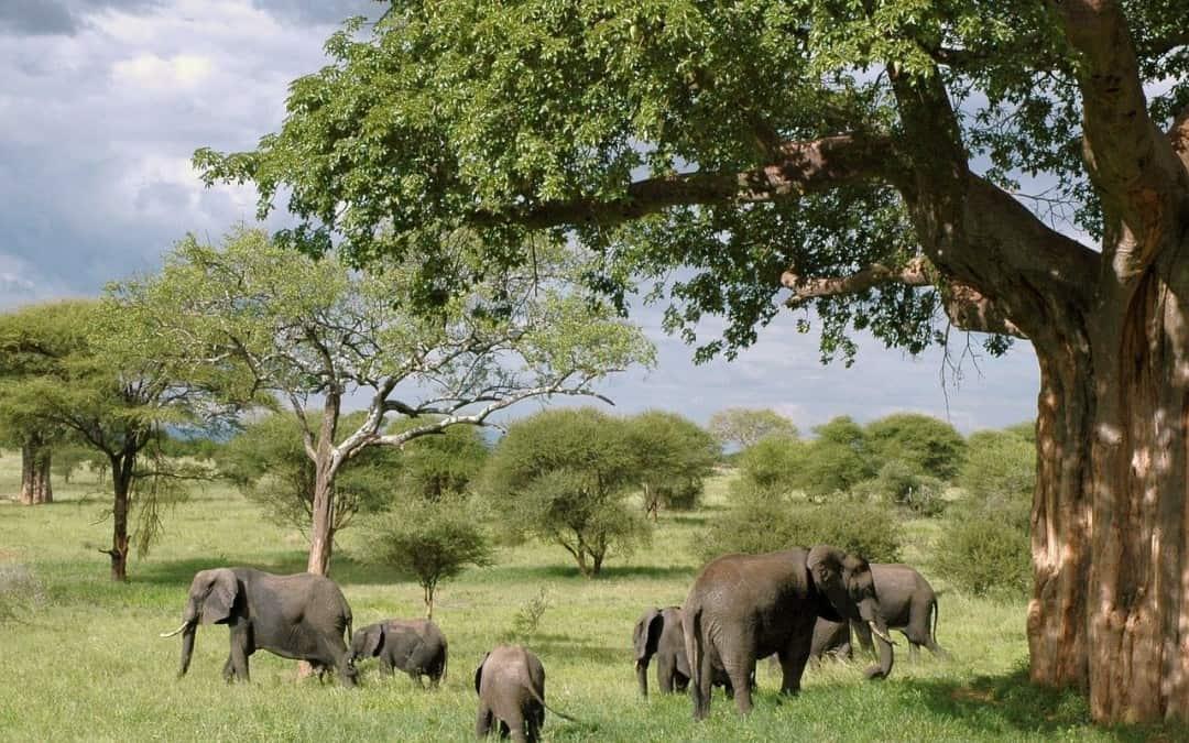 Best Safari Parks In Tanzania