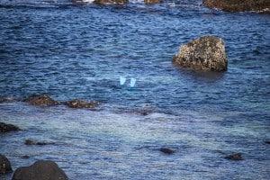 Jeju Women Divers - Haenyeo Things To Do In Jeju road trip