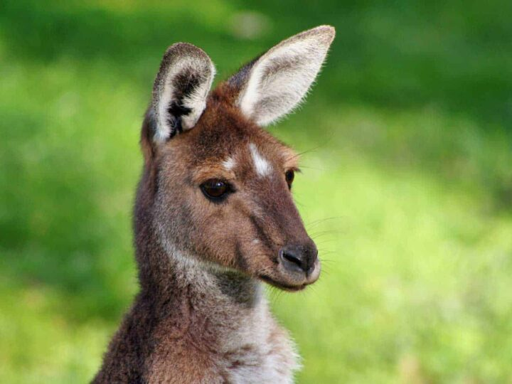 Top Tourist Attractions to Visit in South Australia