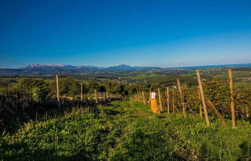 one week in northern spain wineries