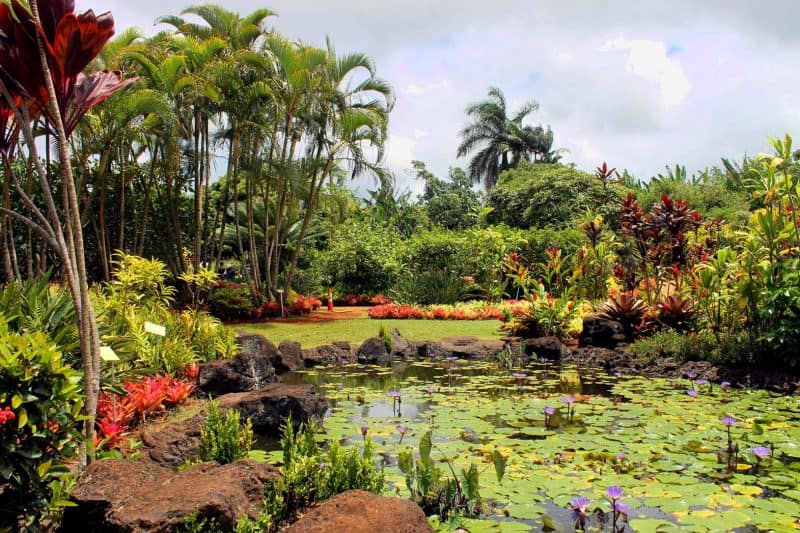 Spend a day at leisure in Dole Plantation garden during your first trip to Hawaii