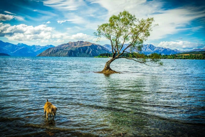 Enjoy outdoor activities at Lake Wanaka during your 5 days in Queenstown