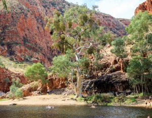 Ormiston Gorge is one of the best things to do near Alice springs.