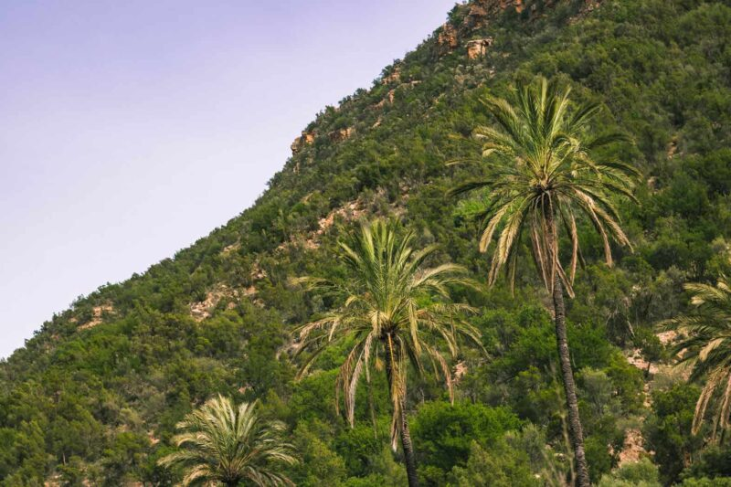 How to Visit Paradise Valley Morocco: A Day Trip to an Oasis