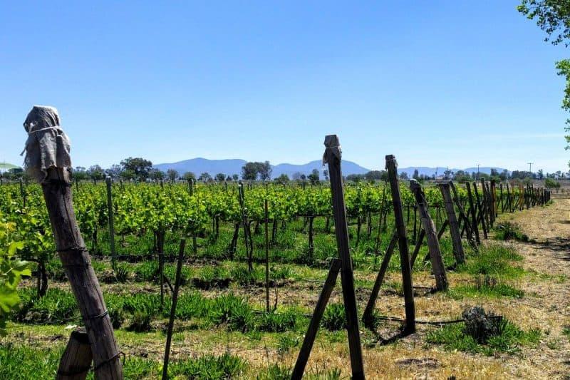 Dos Buhos vineyard San Miguel mexico