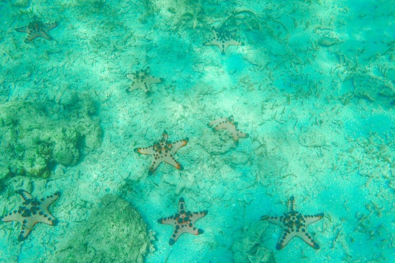 Honda bay Puerto Princesa starfish