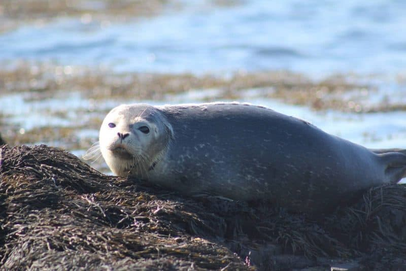 seal on land