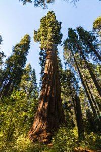 Big Trees National Park