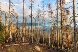dead trees Triangulation peak