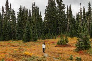 Paradise Fall Colors Mt Rainier
