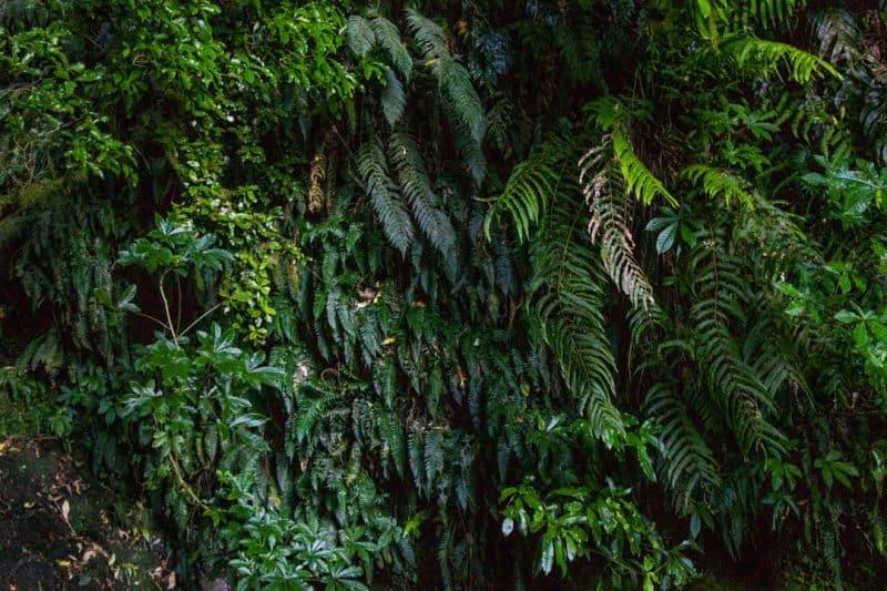 Ferns on Nichols falls