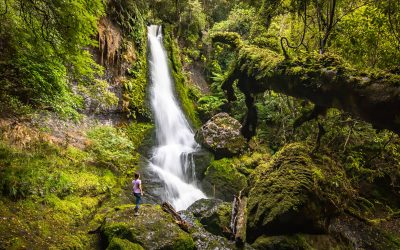11 Things to Do in The Catlins in 2 Days (New Zealand)