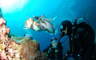 How to Be a Scuba Diving Instructor Abroad