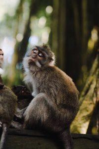ubud monkey forest indonesia