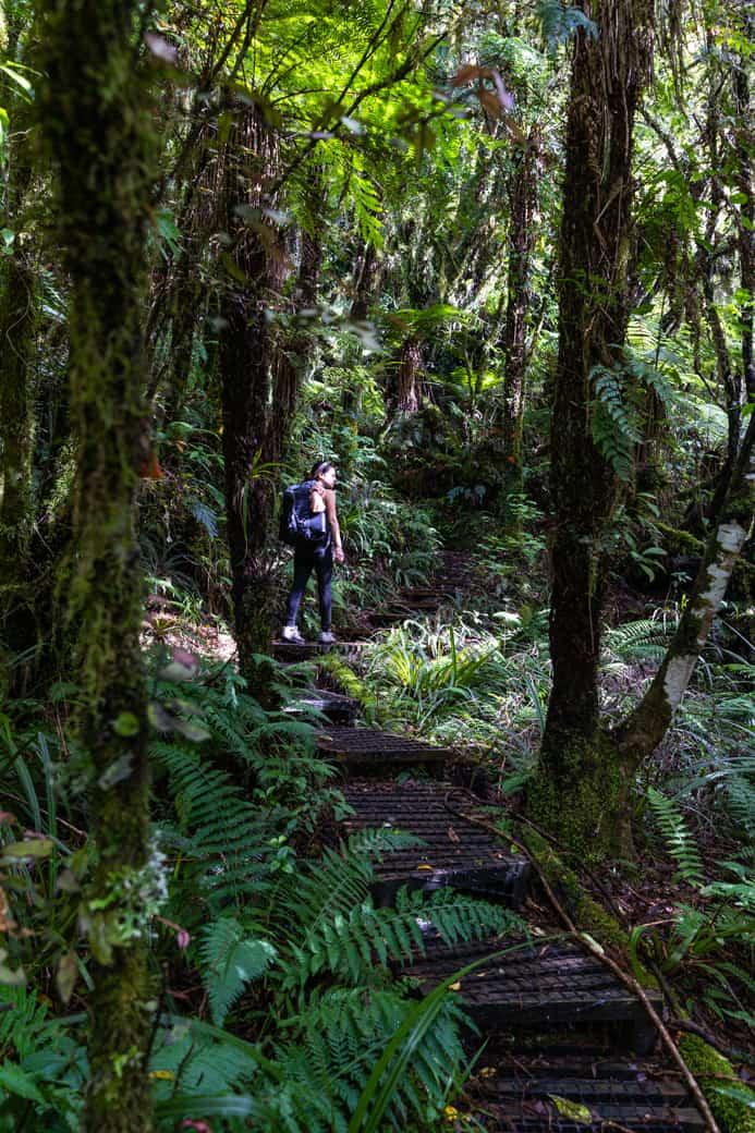 Pouakai circuit forest