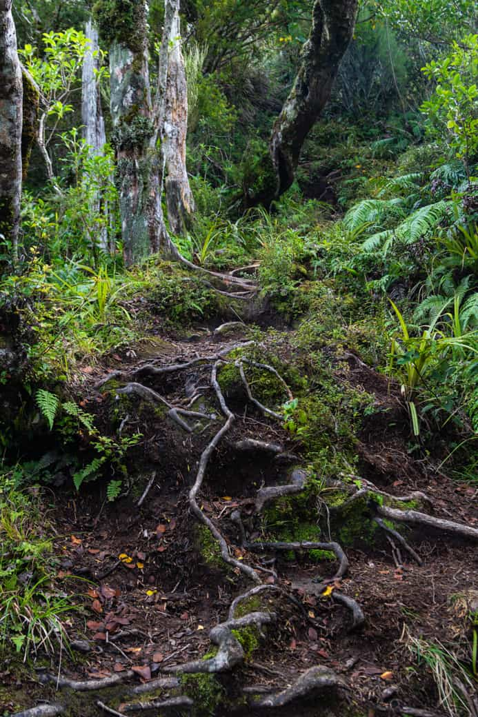 Pouakai circuit forest trail