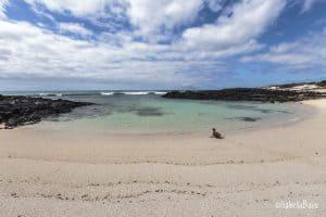 seal on a beach