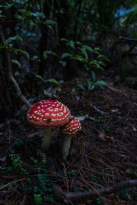 Wentworth Falls hike mushroom