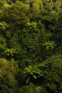 Waitakere ranges Mokoroa waterfall trail