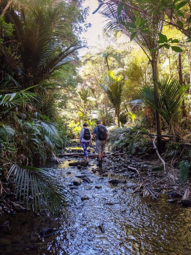 Goldie Bush walkway hike