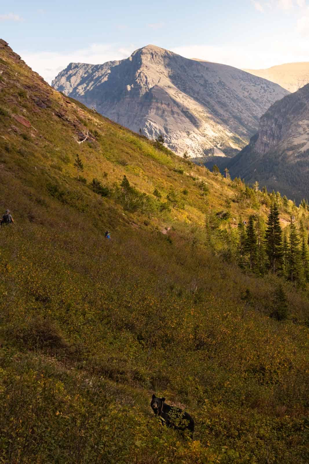 A bear on a hike in Glacier National Park