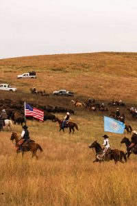 A photo of a buffalo round up — an intriguing thing to do around Rapid City