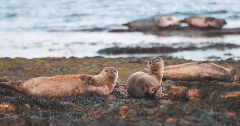 Photo of seals on the beach during Scotland road trip