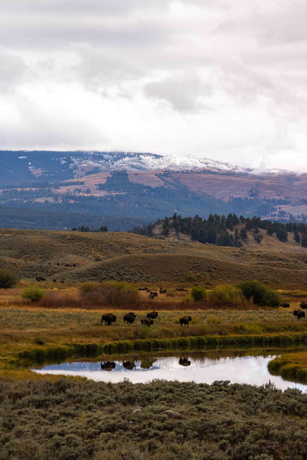 Yellowstone is a must see on your Montana road trip.