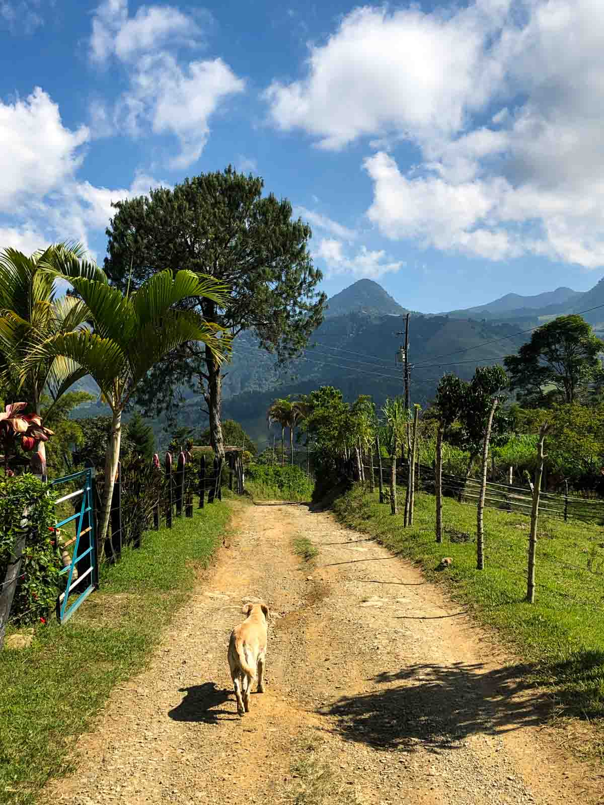 A dog in Jardin, Colombia.
