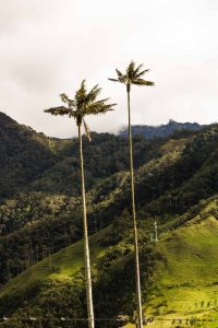 You're going to love the Cocora Valley scenery during your Paramillo del Quindio hike.