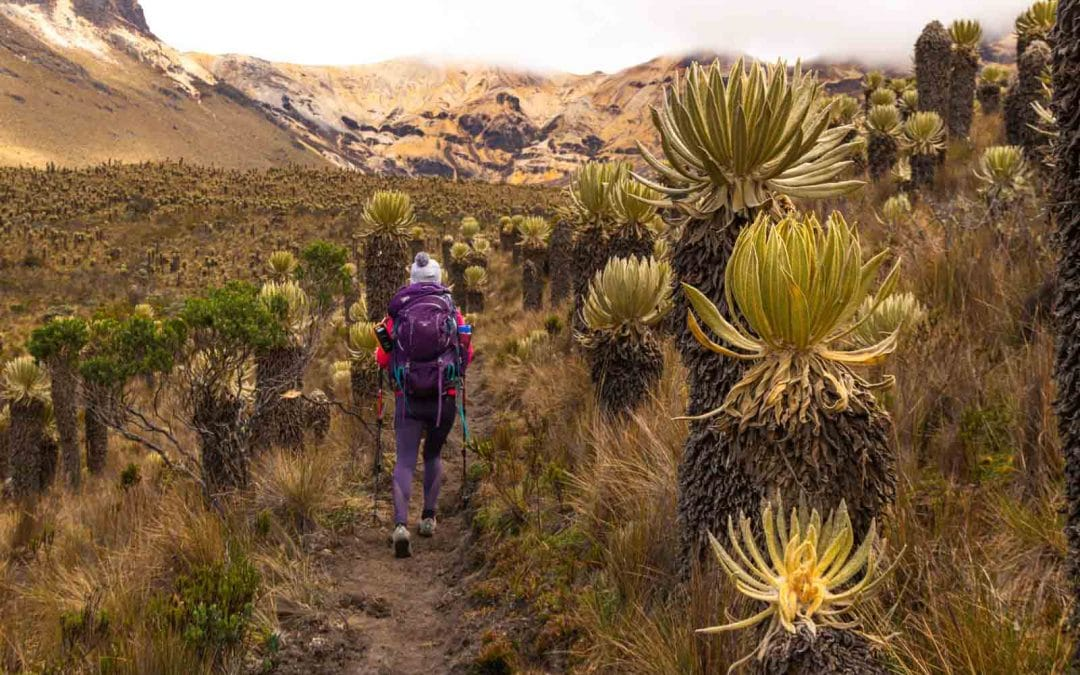 Trekking in Los Nevados National Park: 3-Day Paramillo del Quindio Summit (Colombia)