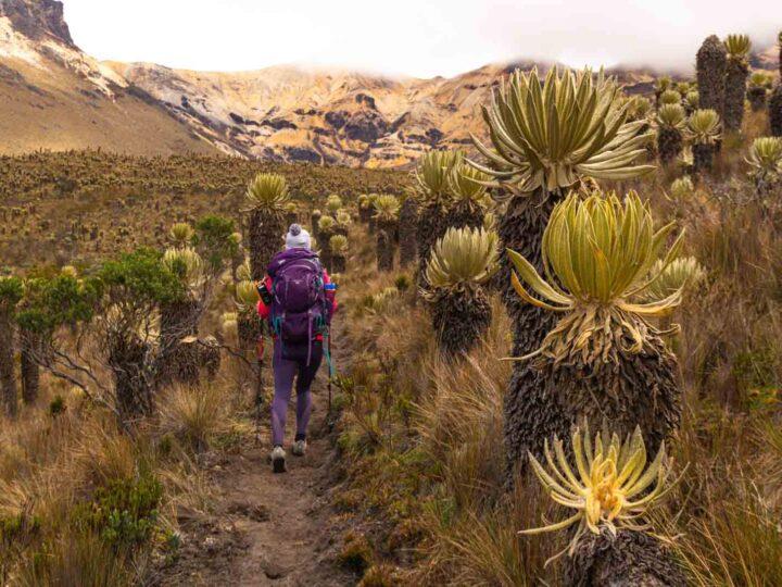 Trekking in Los Nevados National Park: 3-Day Paramillo del Quindio Summit (Colombia)
