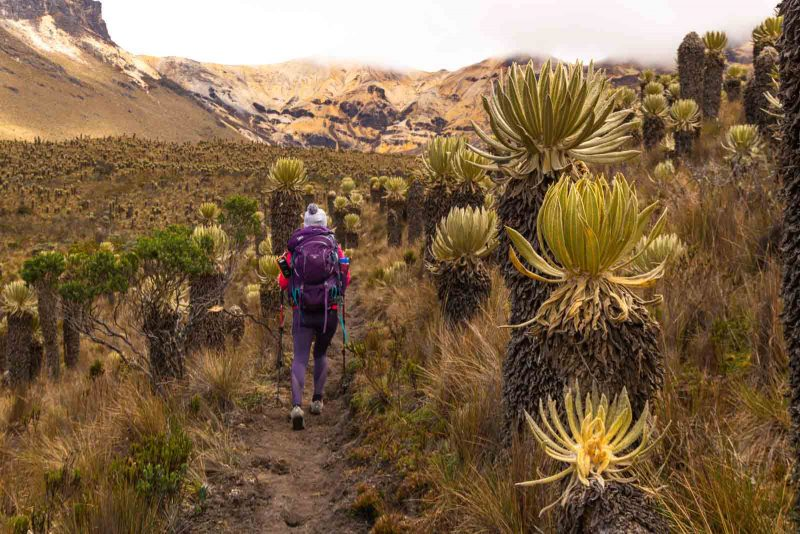 An exhilarating thing to do in Salento is the Los Nevados trek.