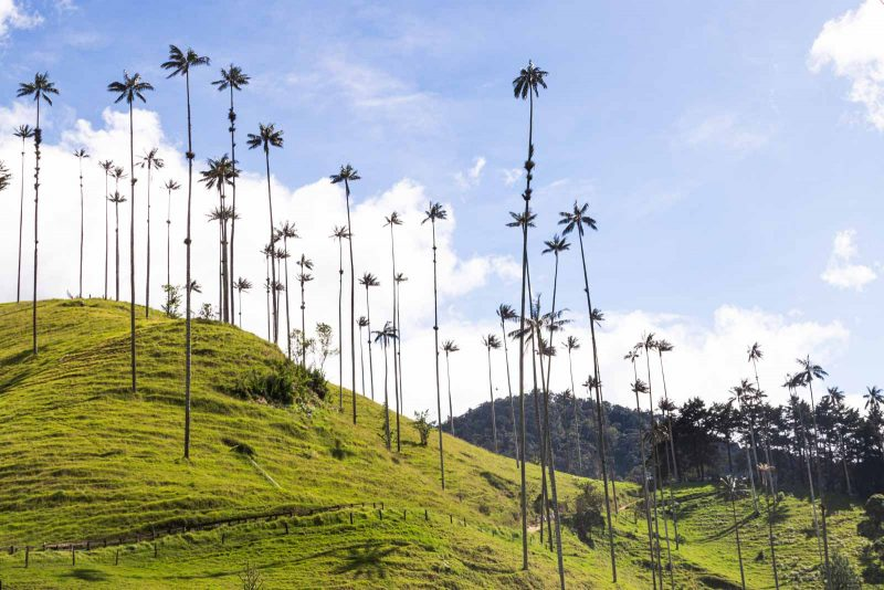 The Cocora Valley is one of the highlights on the Los Nevados trek.