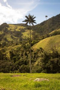 The Cocora Valley was one of my favorite parts about the Paramillo del Quindio hike.