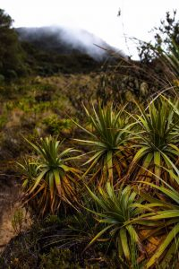 The Los Nevados trek was full of diverse plants.