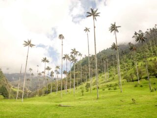 2-Week Colombia Itinerary: Exploring the Andean Coffee Region