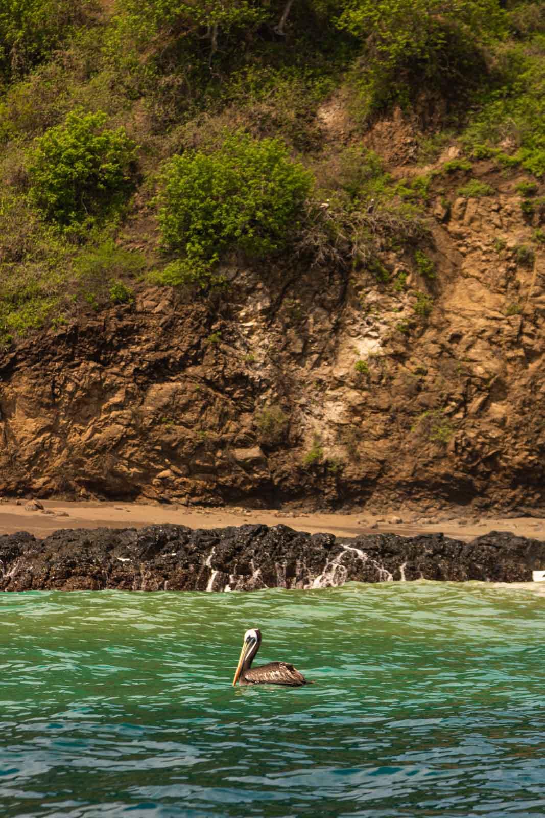 Isla de la Plata is the perfect day trip from Olon, Ecuador.