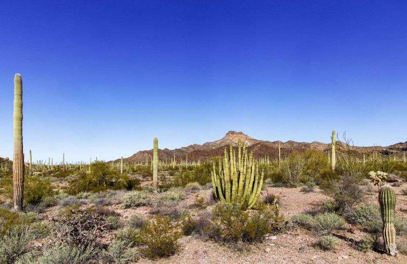 Organ Pipe Cactus National Monument is an epic place to stop on your Arizona road trip.