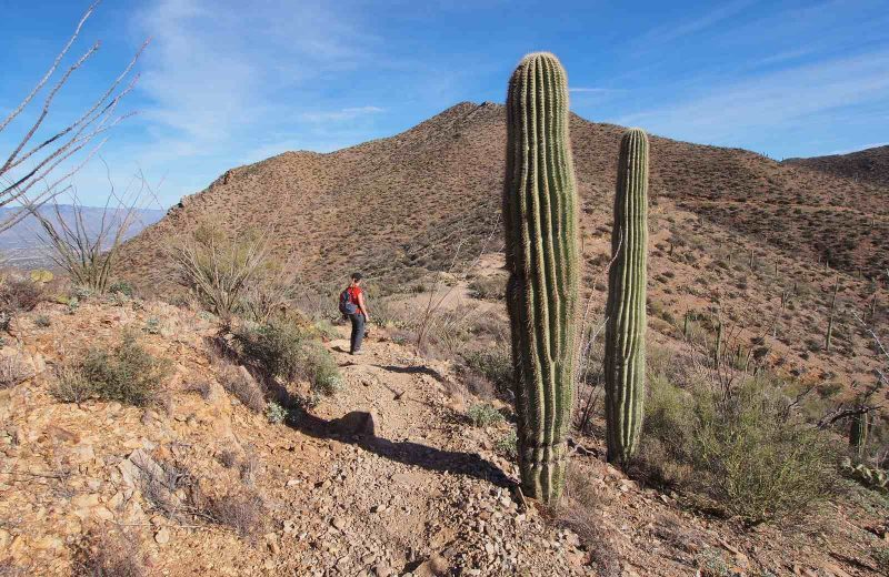 Saguaro National Park is a unique place to visit on your Arizona road trip near Tuscon.