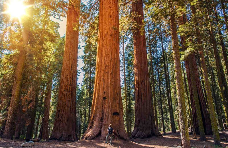 Sequoia National Park is an impressive place to stop on your Southwest road trip.