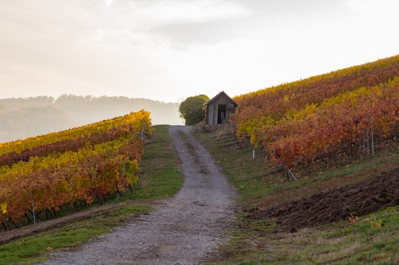 You have to visit the wineries on your German road trip.