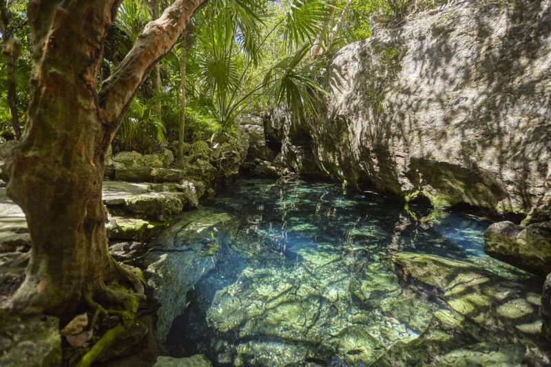 Cenote Azul pool with trees around it in the Yucatan, Mexico