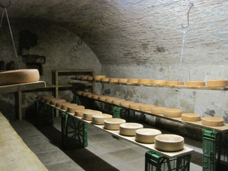 Cellar with cheese lined up on shelves