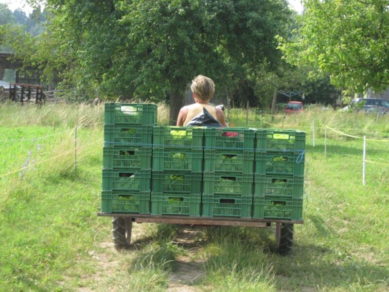Woman from back on tractor towing crates on a farm